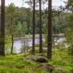 Die Pfeiffers in Schweden: Episode 3 - von Wäldern, versteckten Häusern und einem Naturreservat
