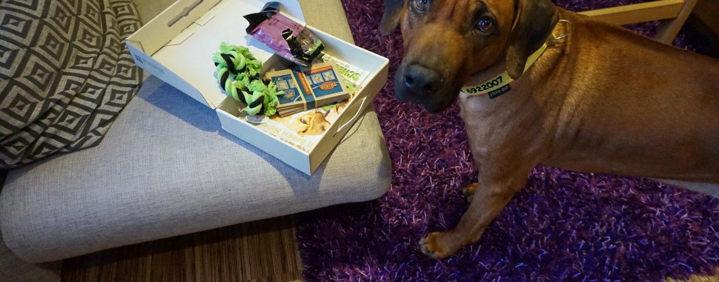 Hundeurlaub im Gasteinertal im 3-Sterne-Hotel Residenz Gruber