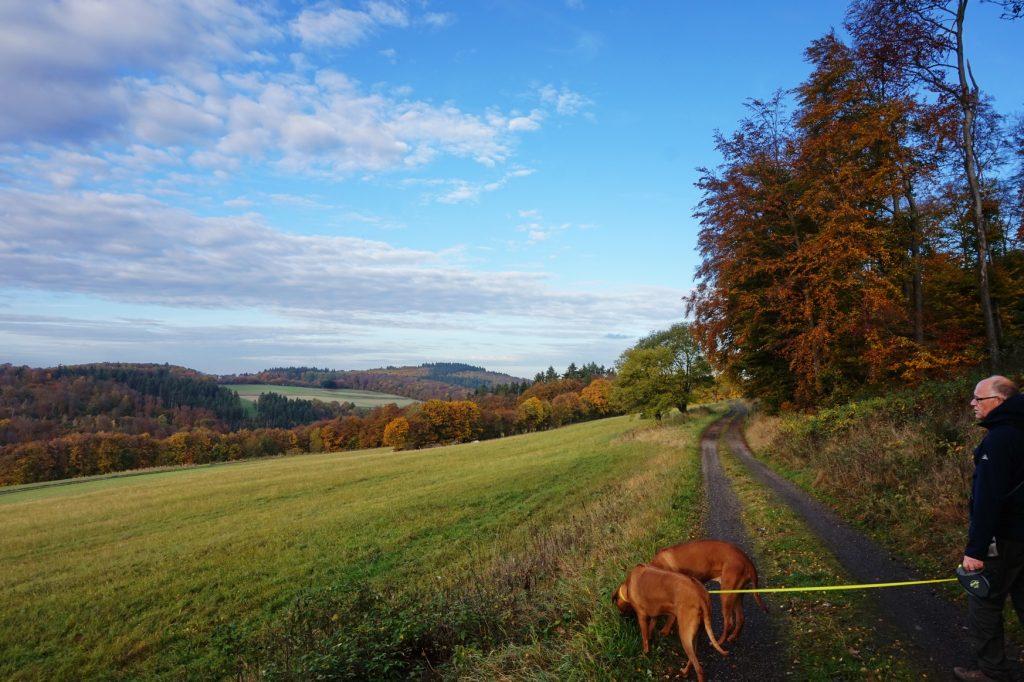 naturpark-hochtaunus-wanderweg-blauer-schmetterling-14
