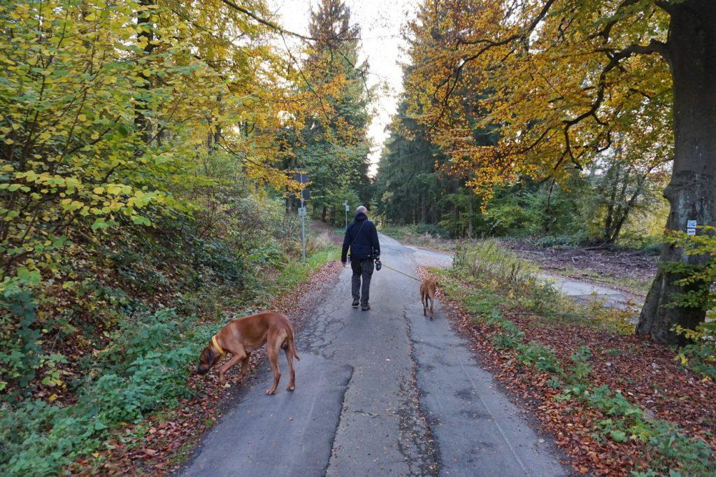 naturpark-hochtaunus-wanderweg-blauer-schmetterling-27