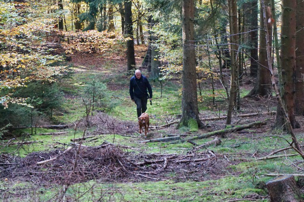 naturpark-hochtaunus-wanderweg-blauer-schmetterling-6