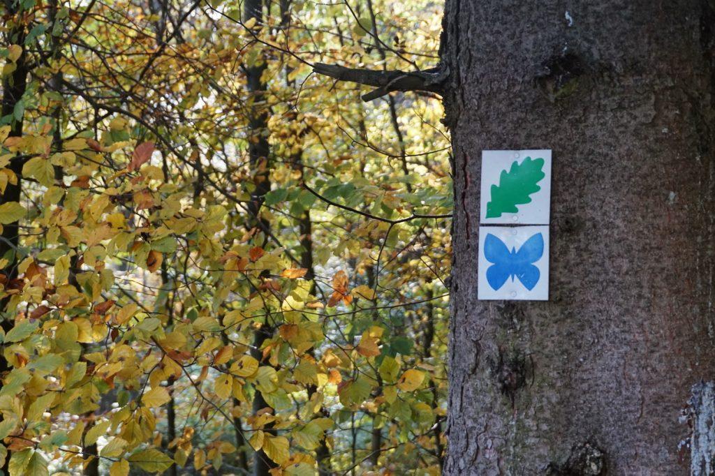 naturpark-hochtaunus-wanderweg-blauer-schmetterling-8