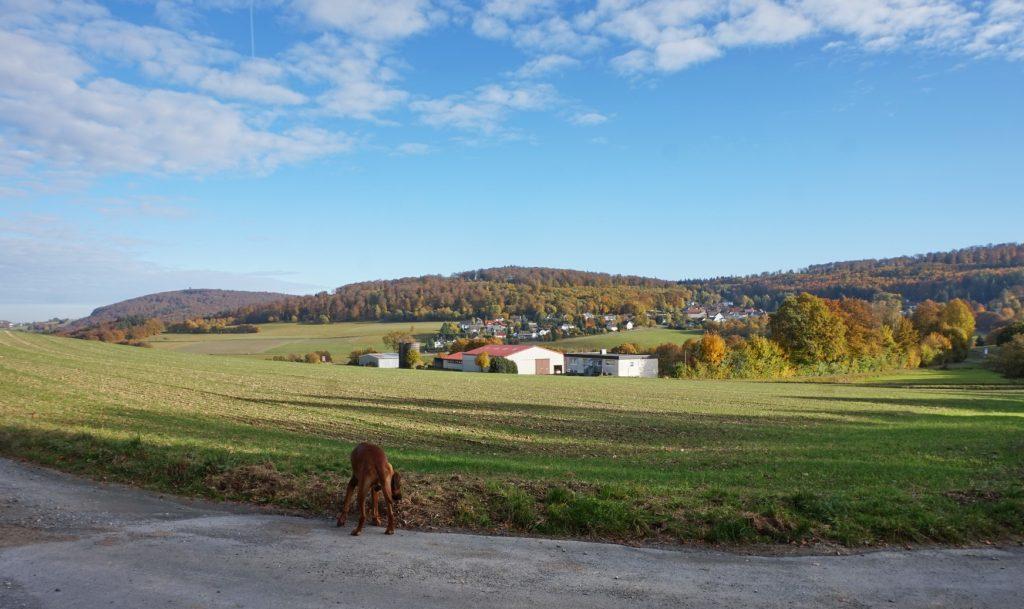 naturpark-hochtaunus-wanderweg-blauer-schmetterling-9