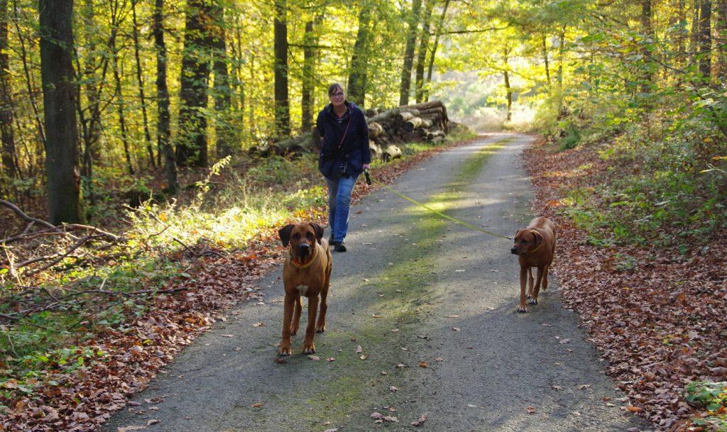 naturpark-hochtaunus-wanderweg-blauer-schmetterling-th-5