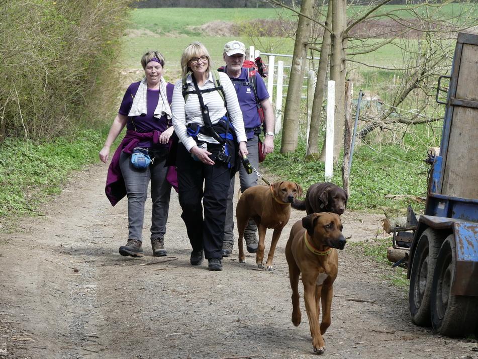 Wandern mit Hunden macht Spaß