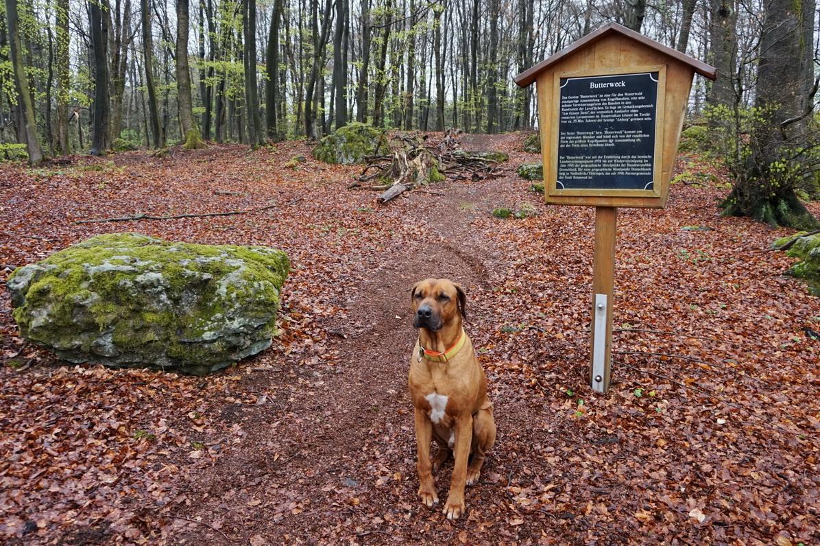 Dayos Gedanken - auf vier Pfoten durch den Westerwald