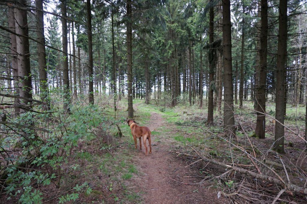 Der WesterwaldSteig mit Hund - Etappe 2