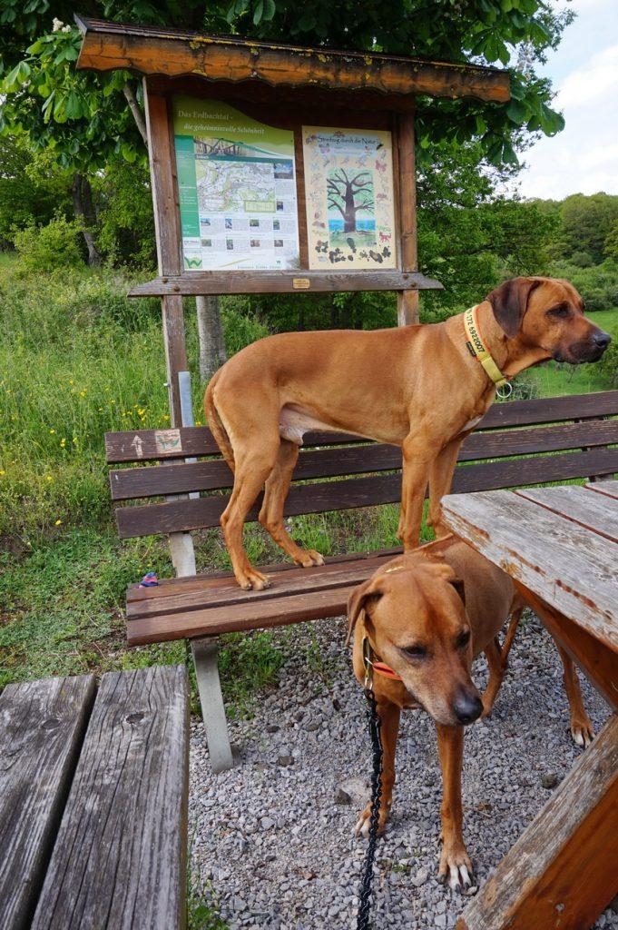 Sonnenschein und viele Steigungen - der Westerwald-Steig mit Hund - Etappe 1