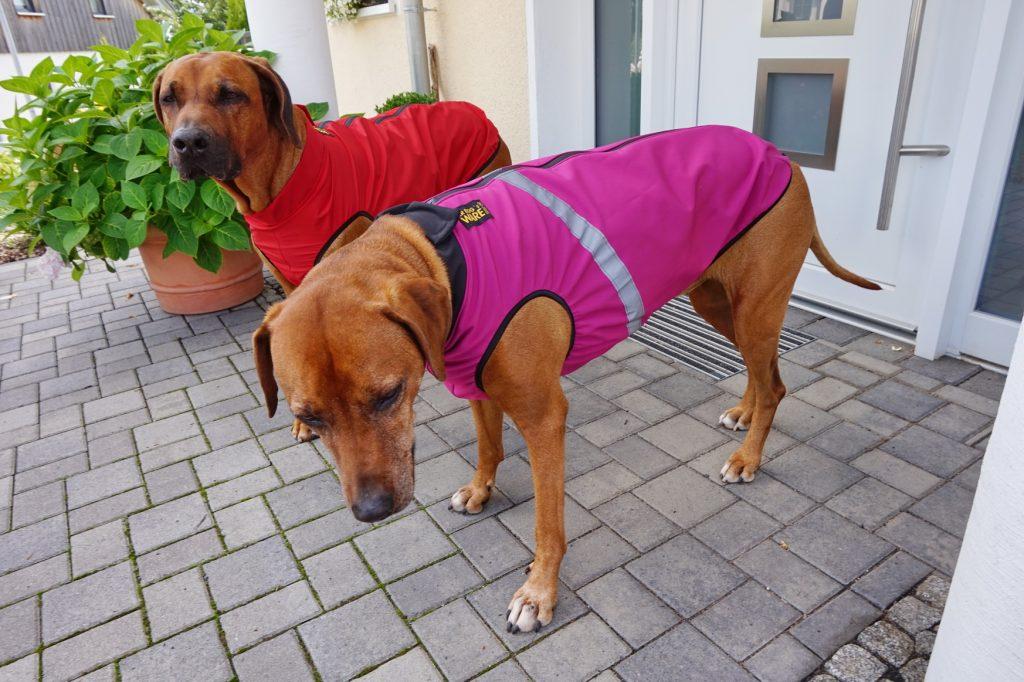 Dayo ist nun in Besitz eines leichten Regenmantels und Suri trägt den wärmeren Softschell-Hundemantel
