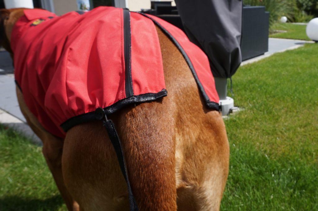 Persönlich getestet: ultraleichter Regenmantel für Hunde