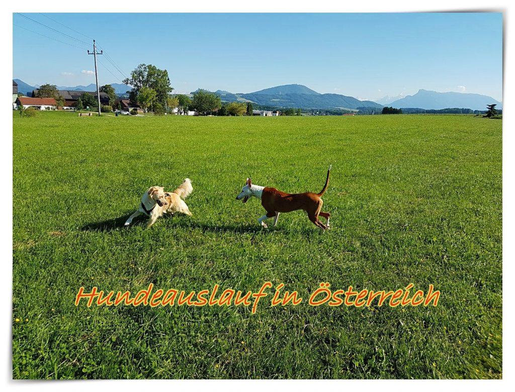 Antonietta, Paolo und die geheime Liebe zu Italien