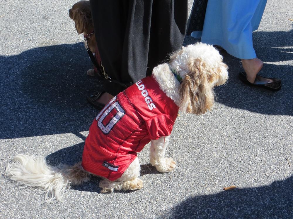 Halloween für Hunde in den USA