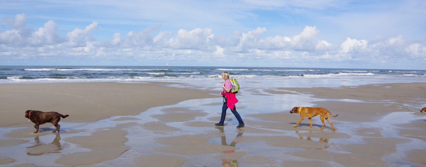Dayos Gedanken - ein Nachmittag am Strand von De Koog