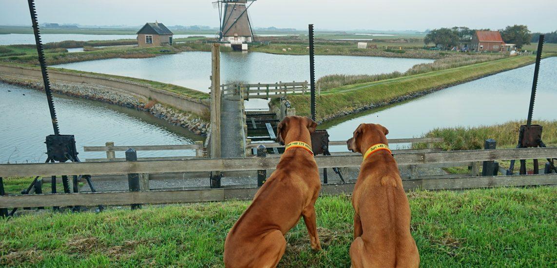 Texel - (k)ein Prinz und die Suche nach der Seilfähre