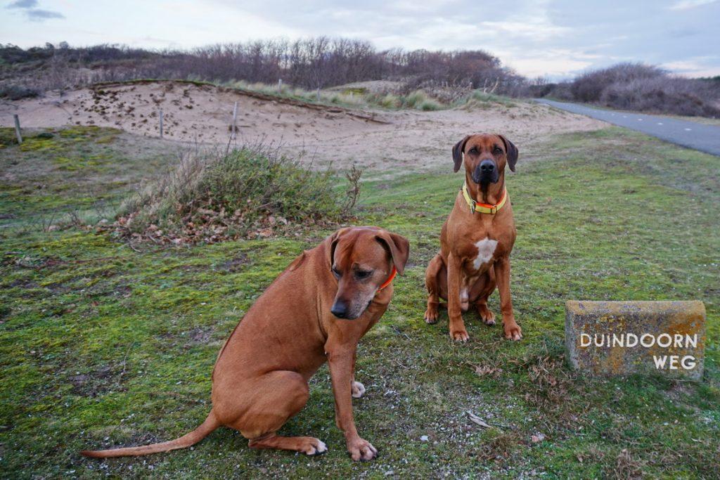 Dayo und Suri posieren geduldig