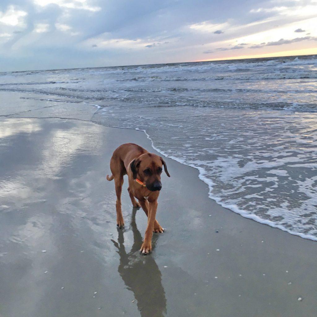 Dayo trotzt Wind und Wellen