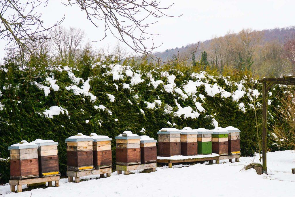 Auch die Bienen sind im Winterschlaf