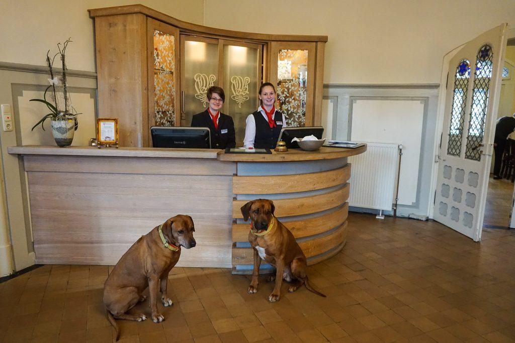 Das Klosterhotel Wöltingerode heißt auch Hund herzlich willkommen