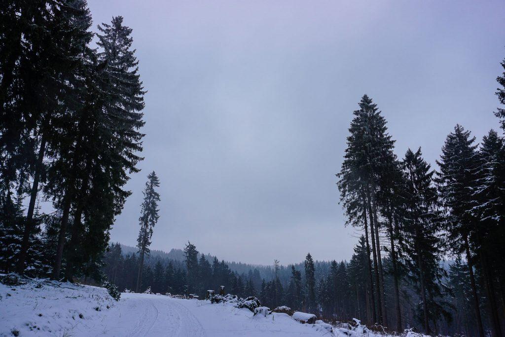 Winterwandern im Harz - rund um den Ebersberg