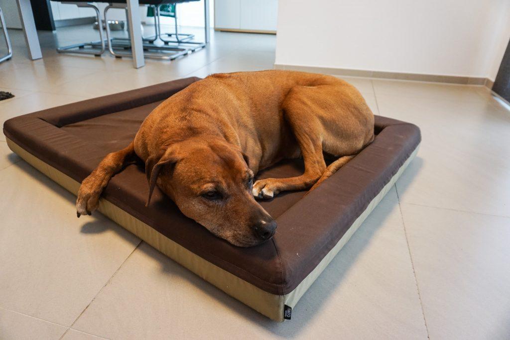 Persönlich getestet - das orthopädische Hundebett von FINNTO