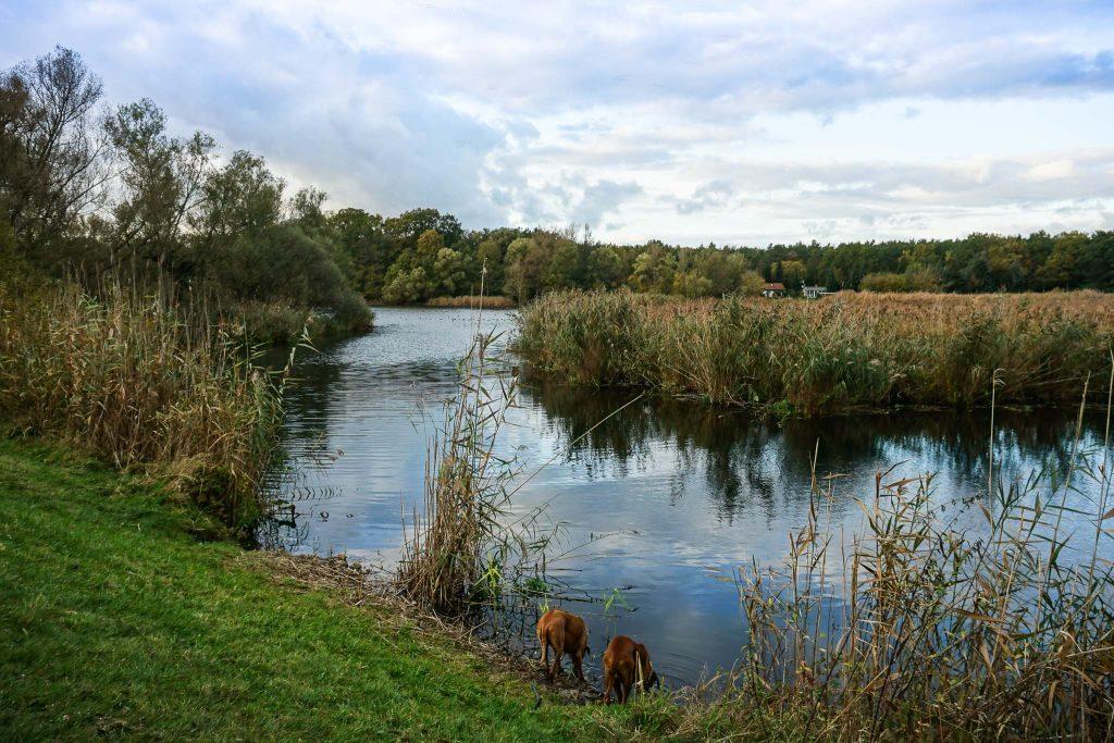 Warum sich ein Städtetrip mit Hund in die Wasserstadt Brandenburg lohnt