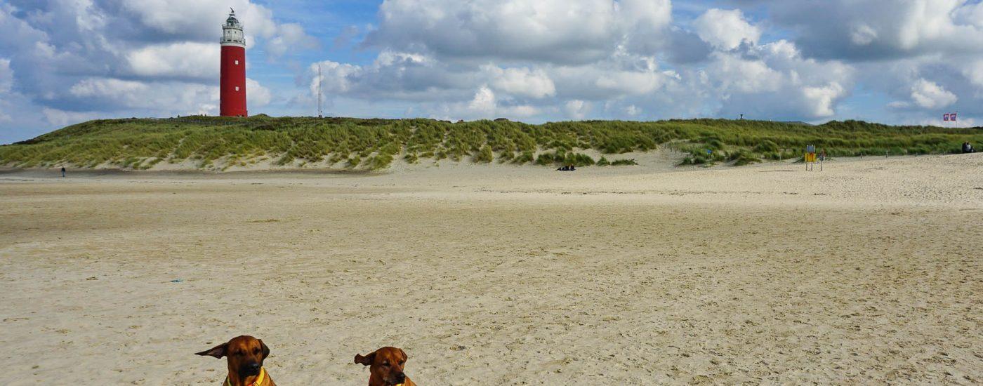 Texel - Unterwegs in den Dünen von Eierland