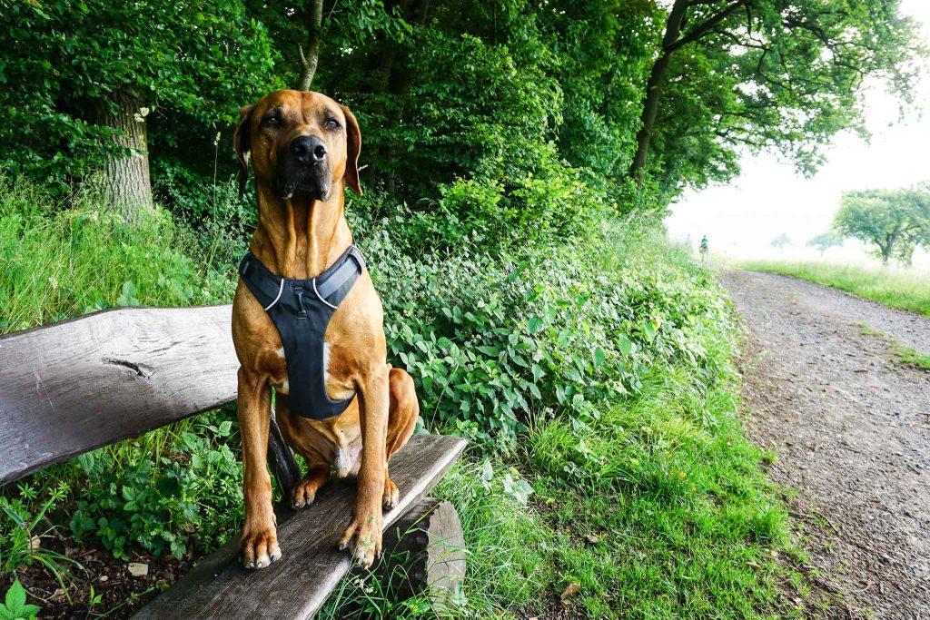Persönlich getestet - das Front Range Dog Harness von Ruffwear