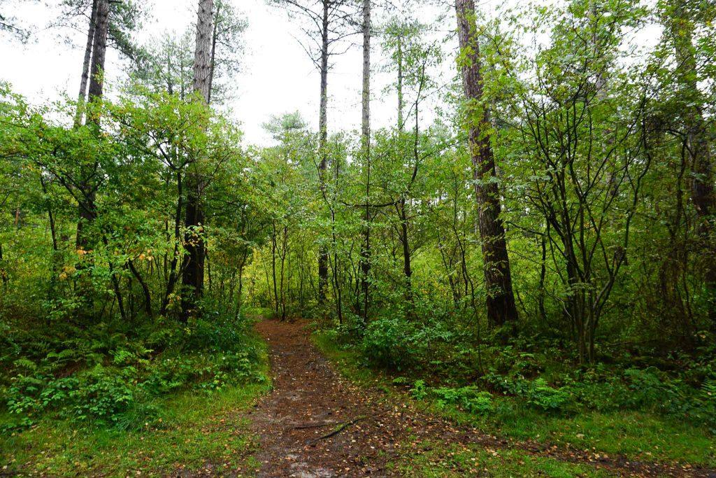 Dayos Gedanken - auf Texel gibt es auch Wald!