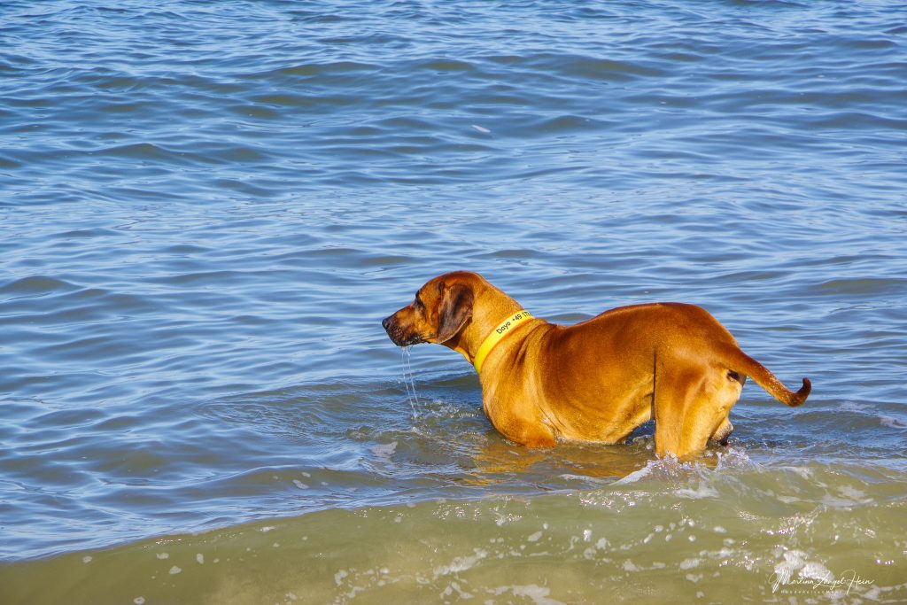 Dayo wagt sich ins Wasser