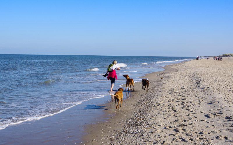 Auch die Hunde haben Spaß am Strandspaziergang