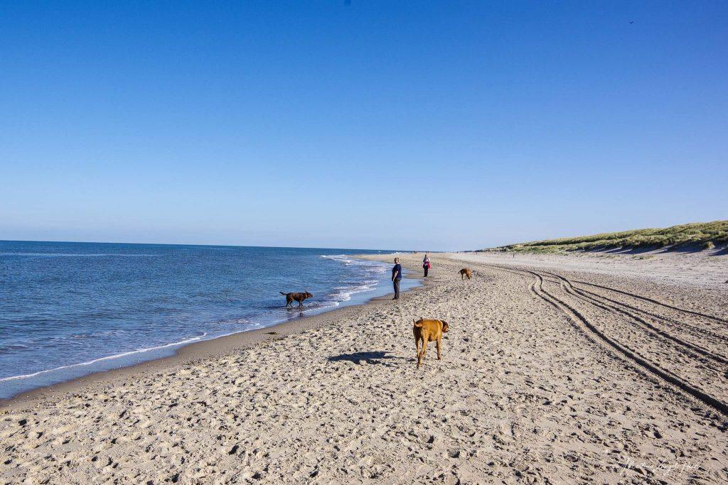 Von Paal 21 aus geht es erst einmal am Strand entlang