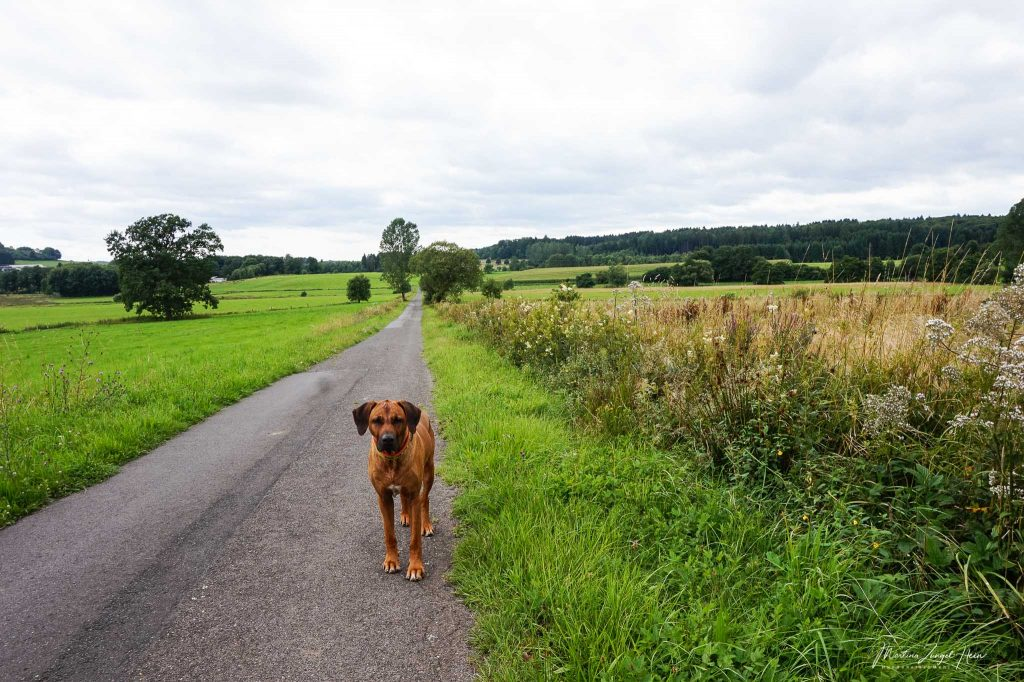 Mit Dayo auf dem WesterwaldSteig - Etappe 5
