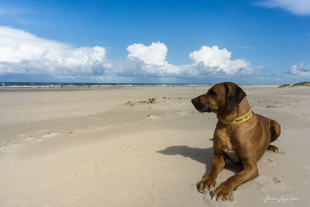 Praktische Ratschläge für einen entspannten Urlaub auf Texel