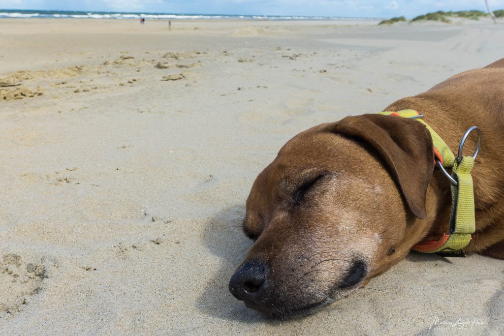 Texel - Hunde am Strand entspannen