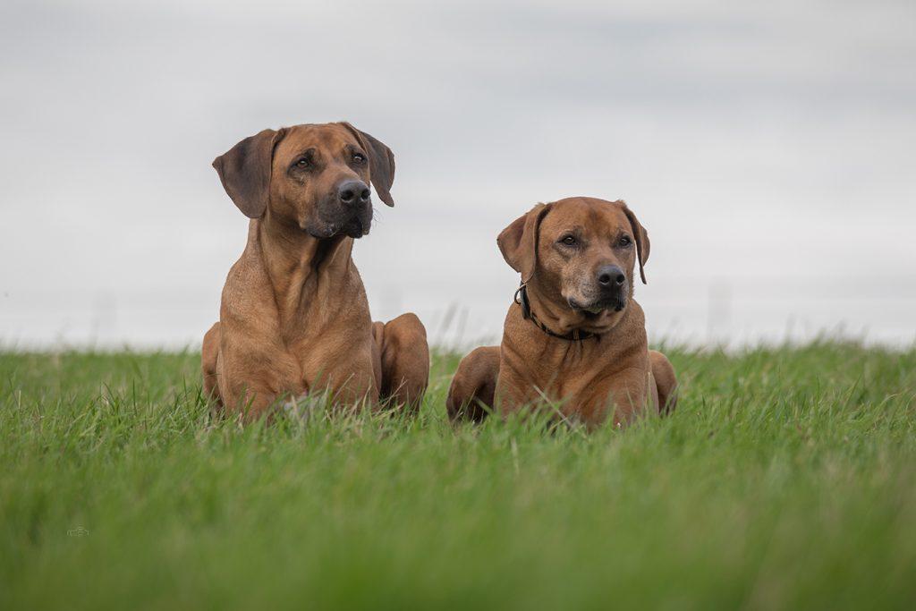 6 Jahre HundeReisenMehr und 3 Fotopreise gewinnen