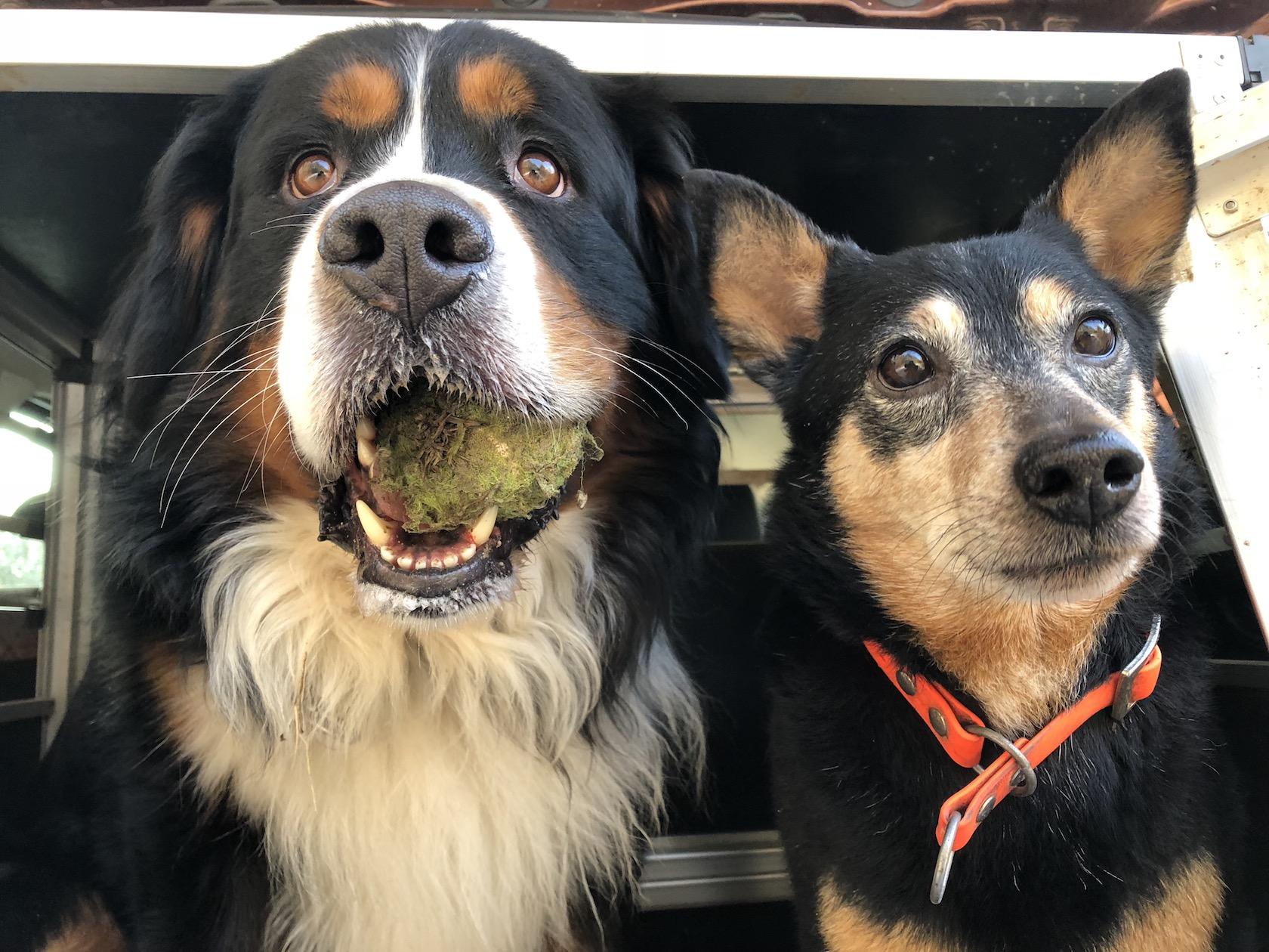 Die Hundenomaden - von einem Rudel, das auszieht, Europa zu erkunden