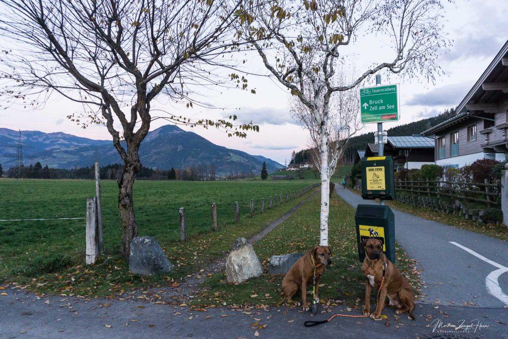 Hundum zufrieden im Alpenhaus Kaprun