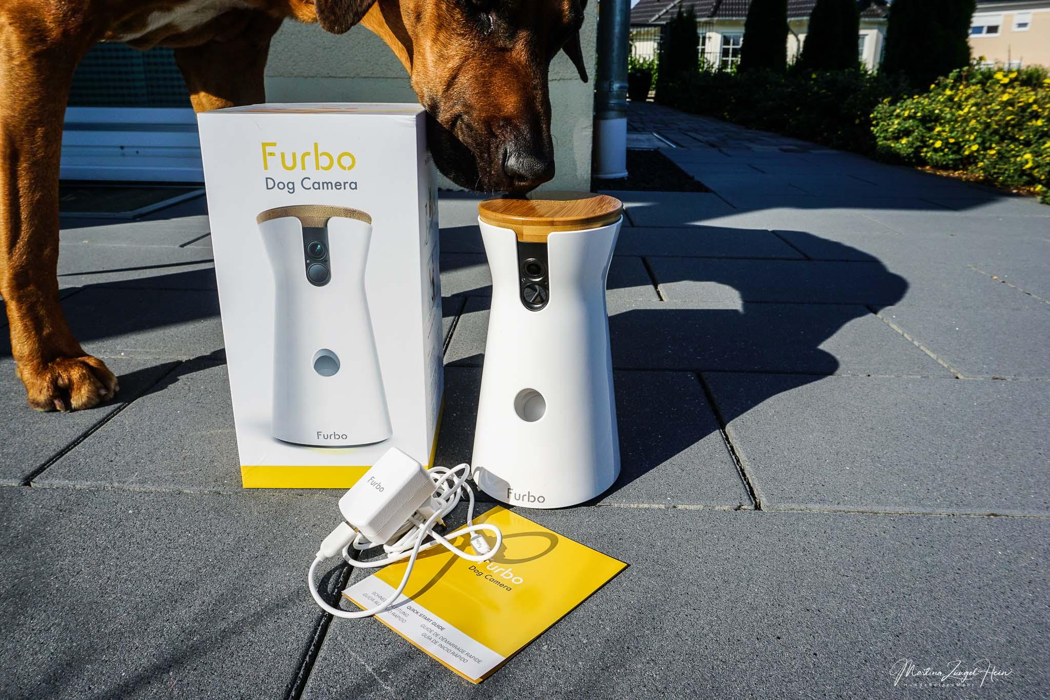 Die Furbo Hundekamera - das ideale Last-Minute-Geschenk zu Weihnachten