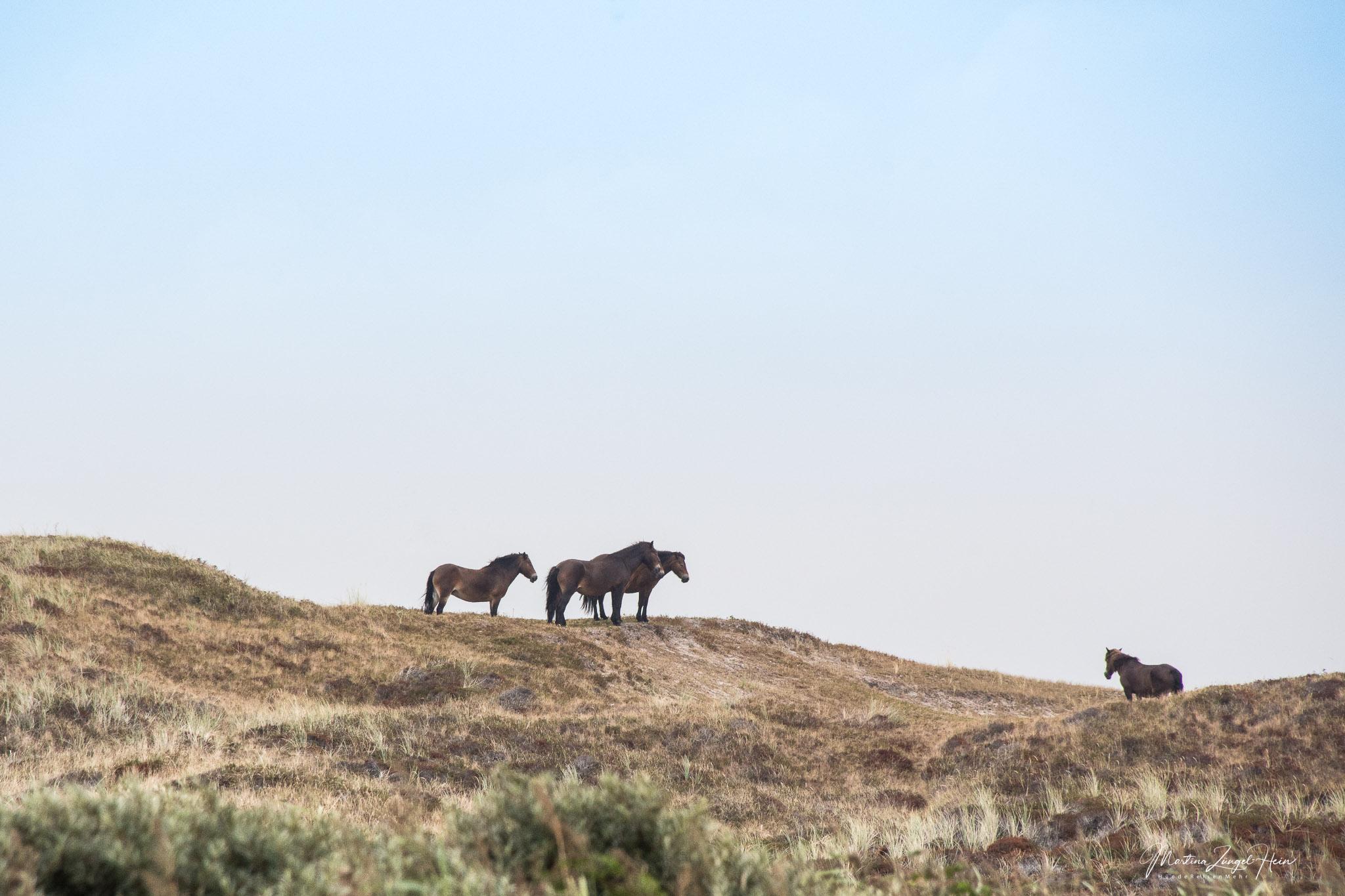 De Bollekamer - von Wildpferden und Bunkern