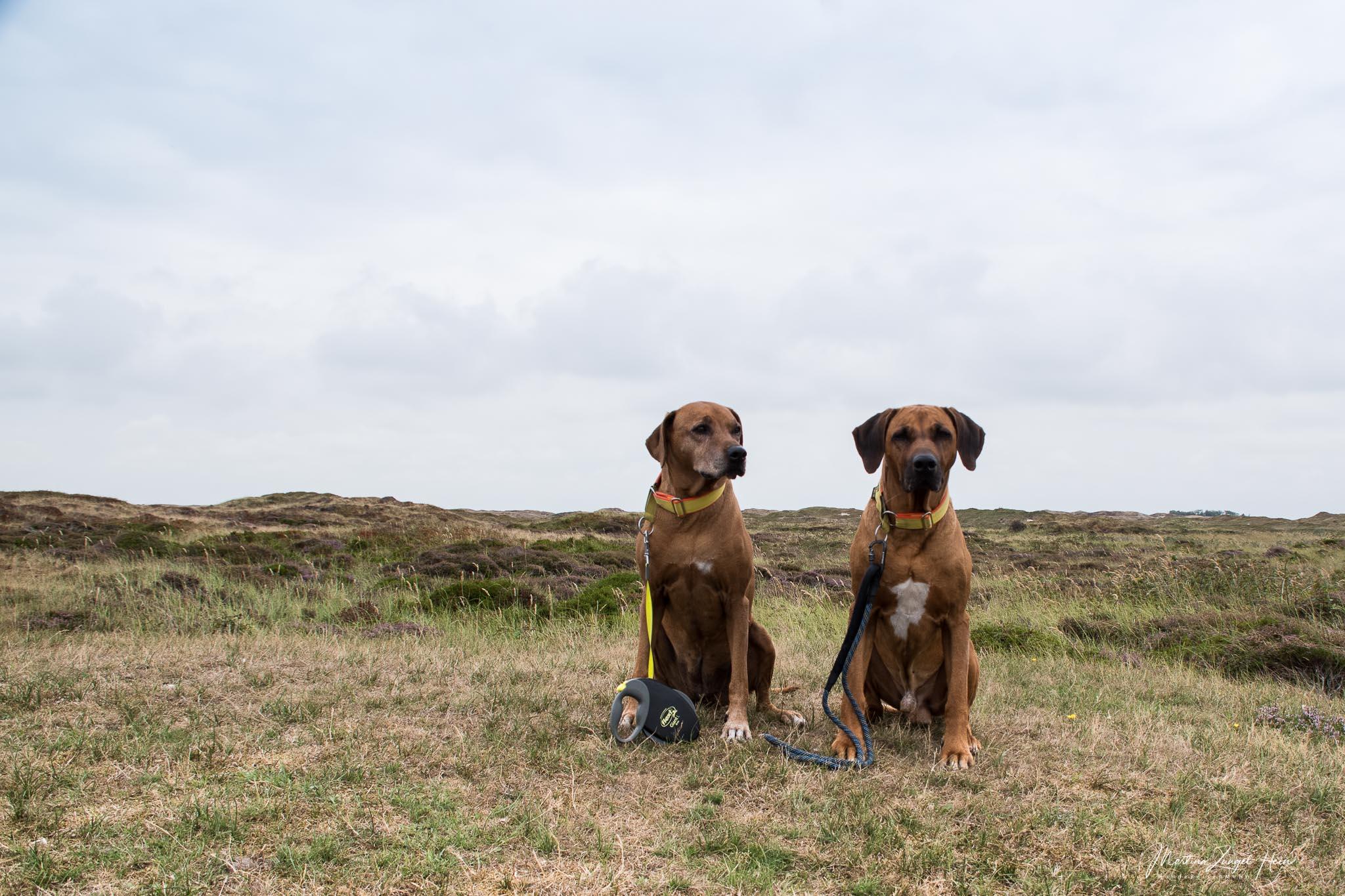 Auch wenn alles etwas langsamer geht, macht auch das Reisen mit Seniorenhunden Spaß