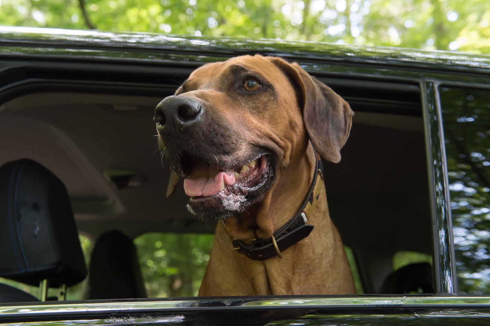5 Tipps zum Reisen mit Senioren-Hunden