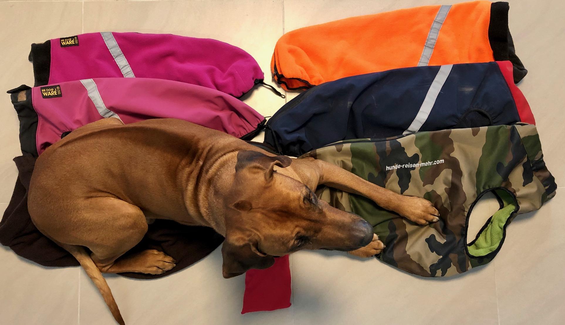 Dayo und Suri besitzen mehrere Hundemäntel von RR Dog's Ware