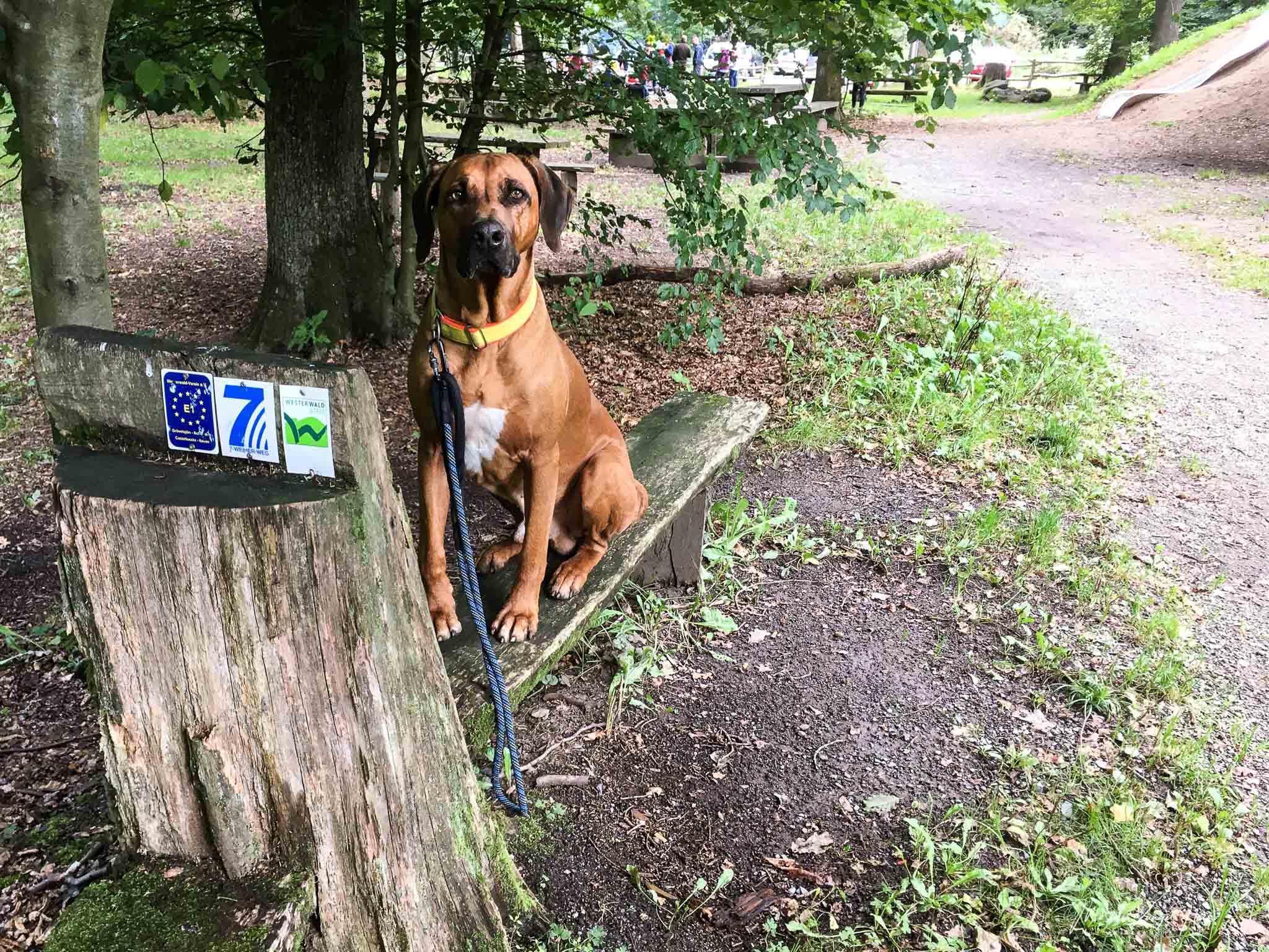 WesterwaldSteig mit Hund - Etappe 6