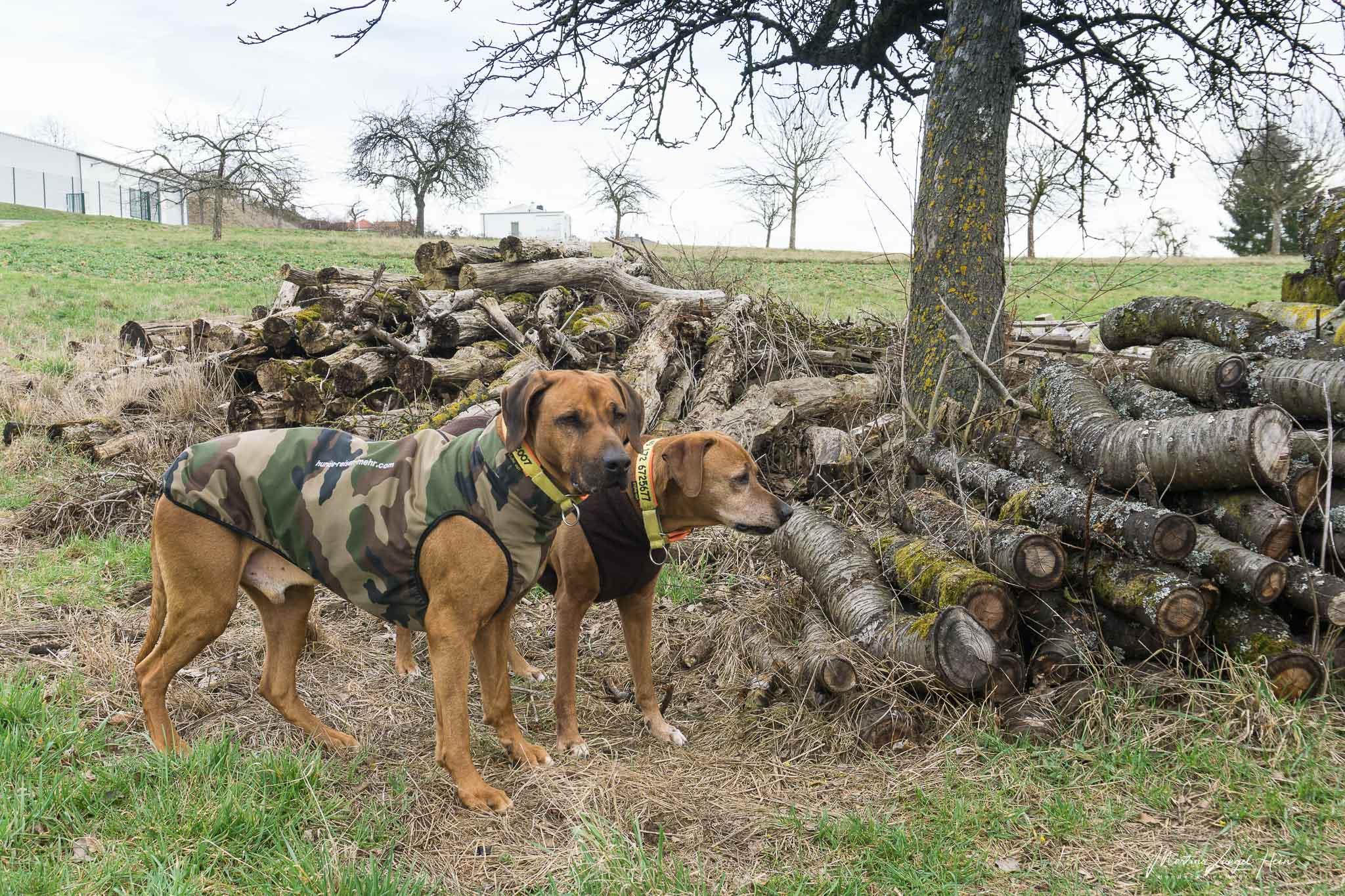 Luxuriös und kuschelig - die neuen Hundemäntel von RR Dog's Ware