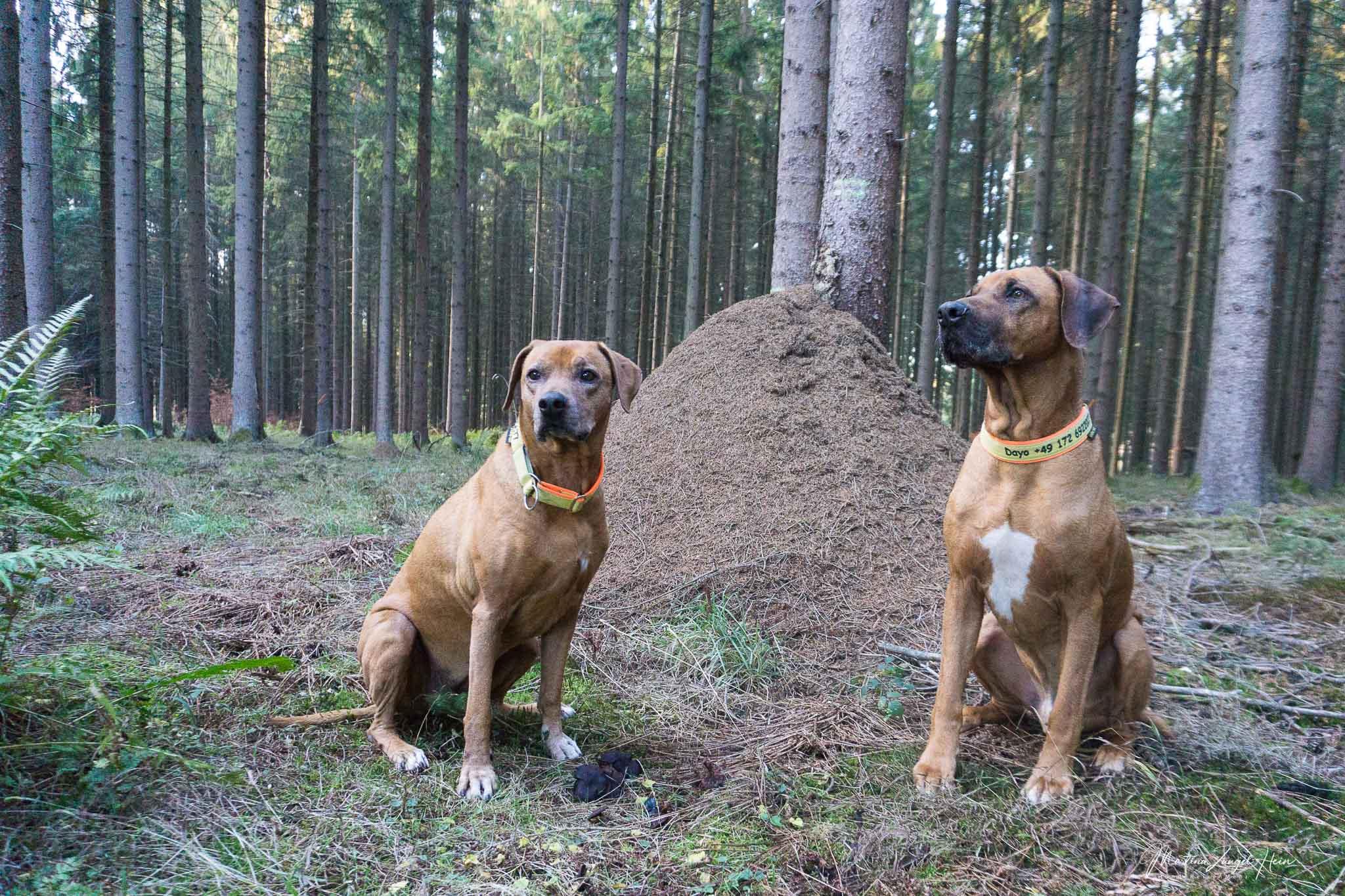 Rundwanderweg Multitalent Wald - kurz und schmerzlos