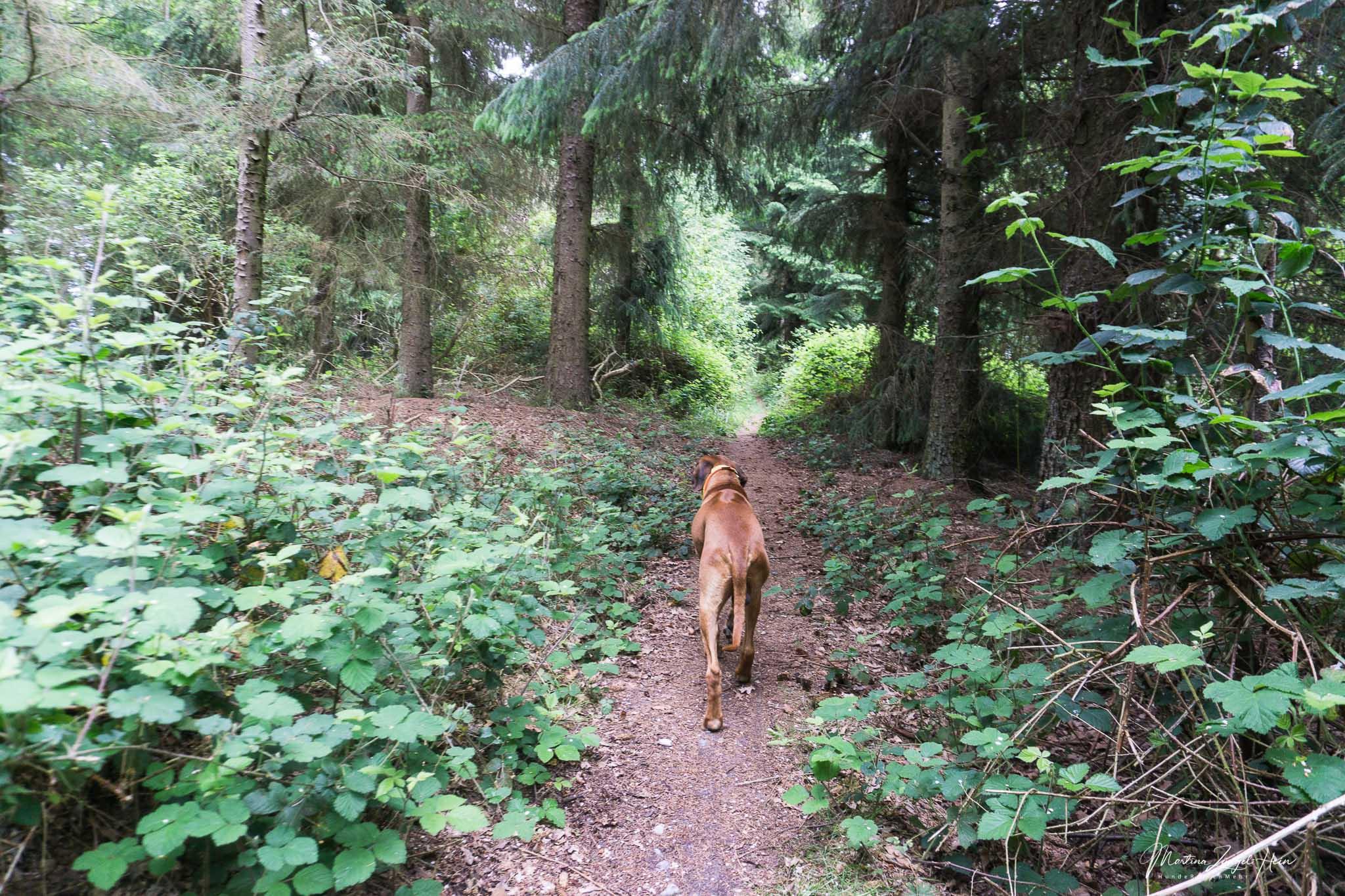 Fehmarn - 3 Tipps mit Hund, aber ohne Hundestrand