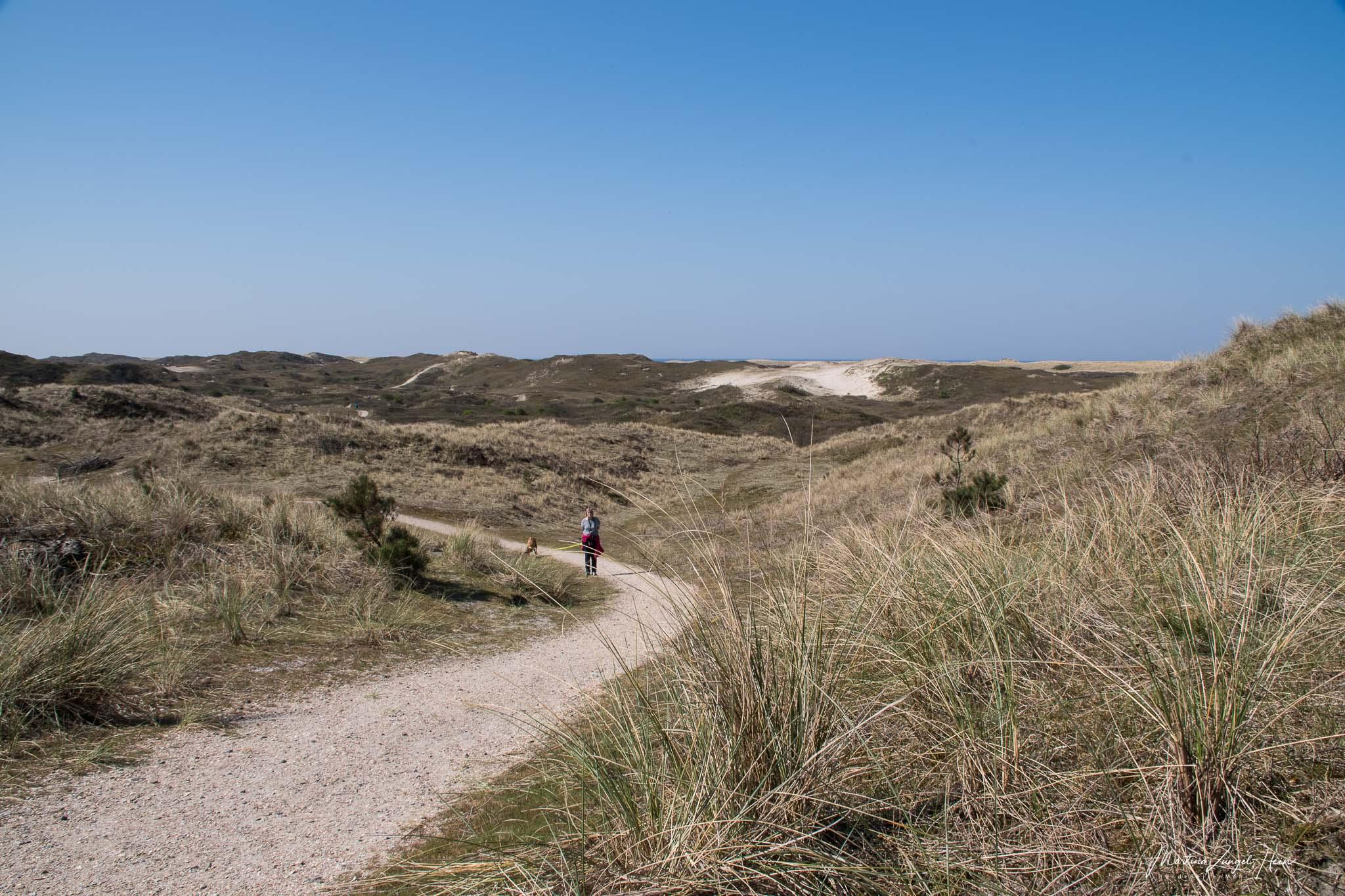 Texel - unterwegs in den Dünen bei Paal 17