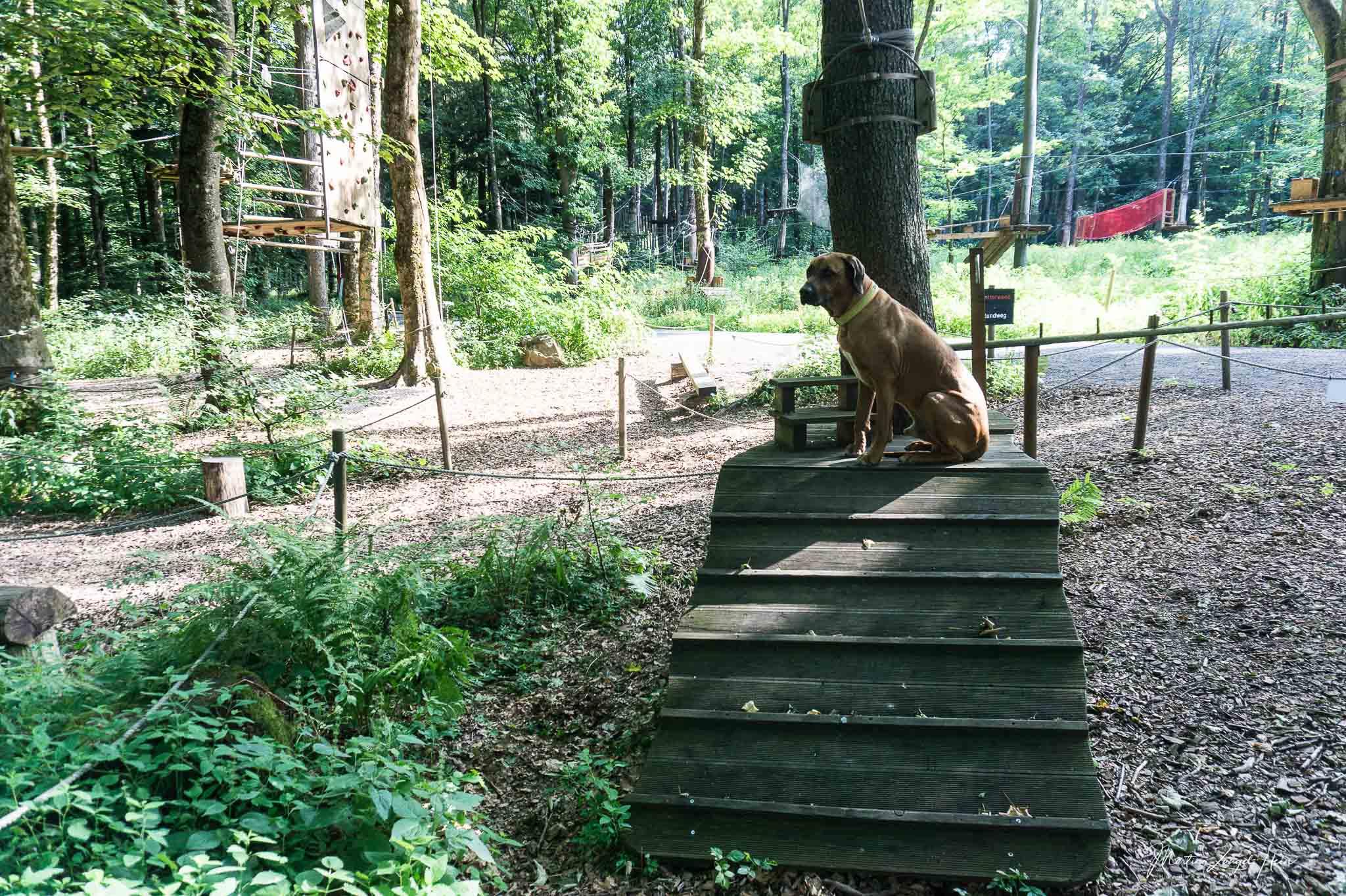 Dayo erforscht den Kletterwald von Bad Marienberg