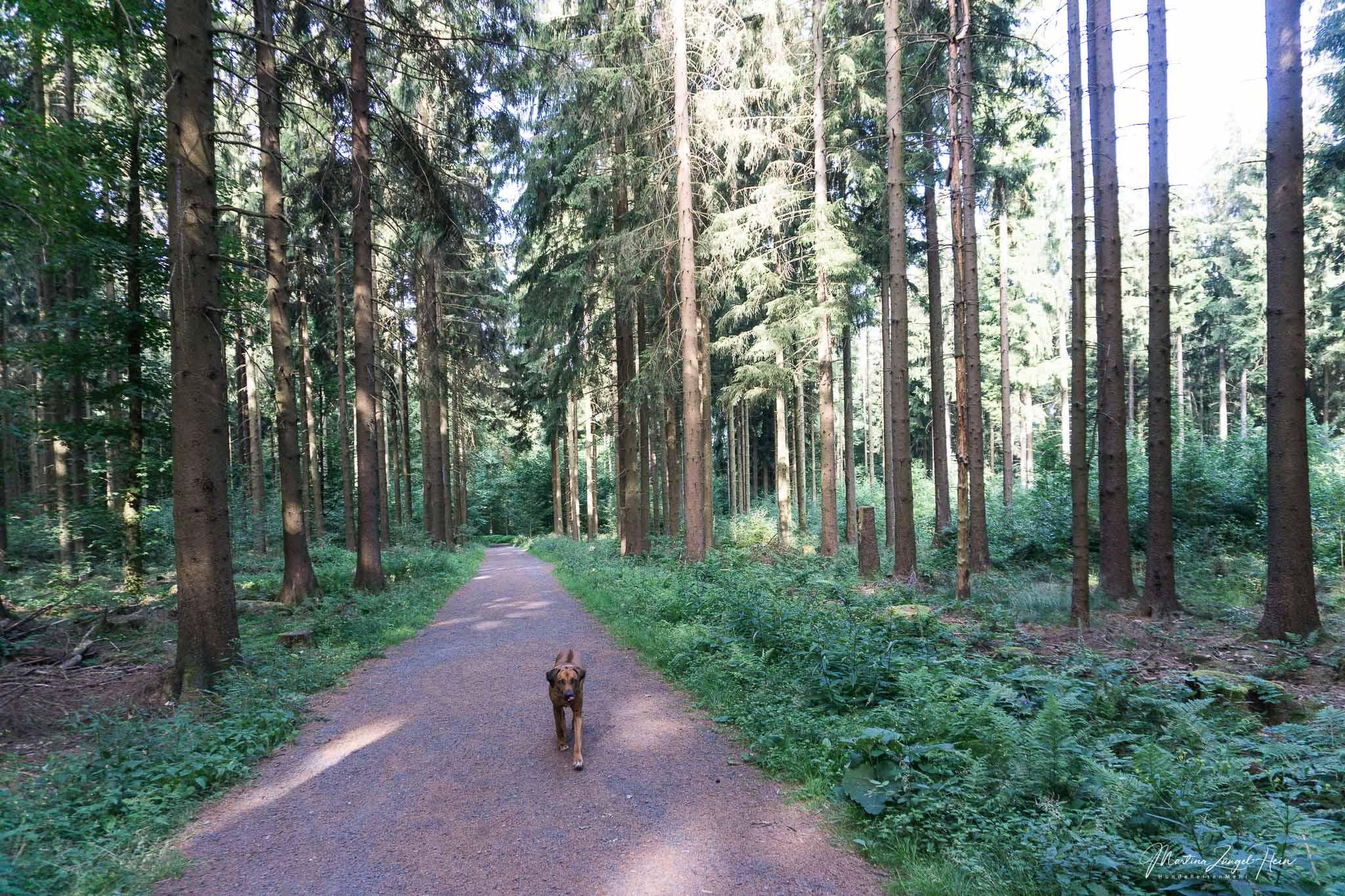 Breite Wanderwege rund um den Kletterwald in Bad Marienberg