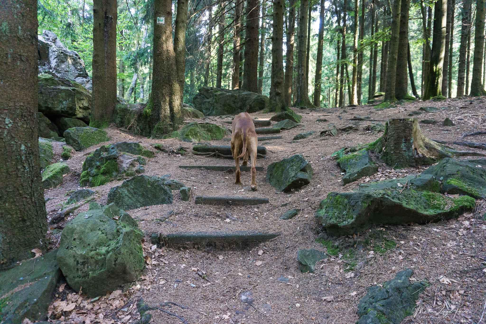Von der Waldkirche geht es auf den großen Wolfstein